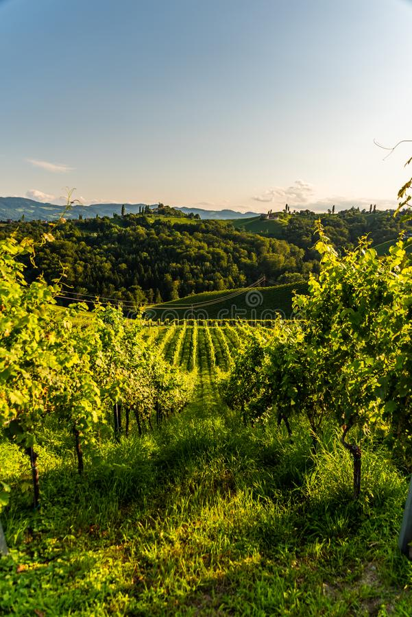 Austria, south styria vineyards travel destination. Tourist spot for vine royalty free stock photography