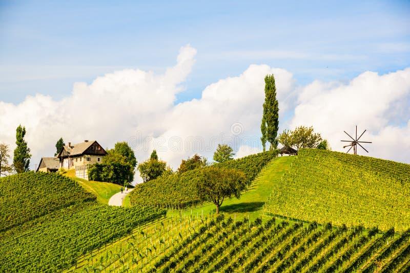 Austria Vineyards Leibnitz area south Styria travel spot. Austria Vineyards Sulztal Leibnitz area south Styria Bad Radkersburg, wine country stock images