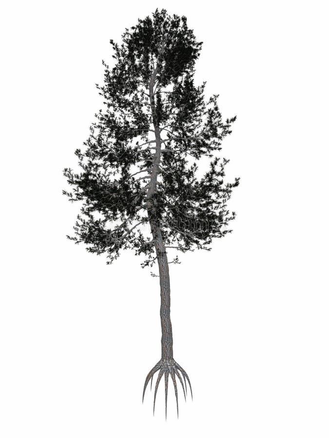 Austrian or black pine, pinus nigra tree - 3D royalty free illustration