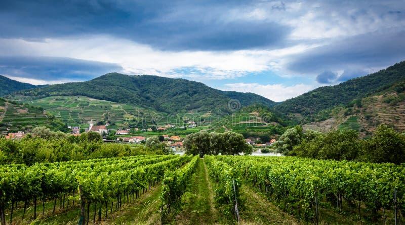 Austrian vineyard stock image