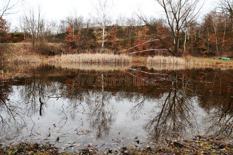 Austrocknen von Teich stockfotos