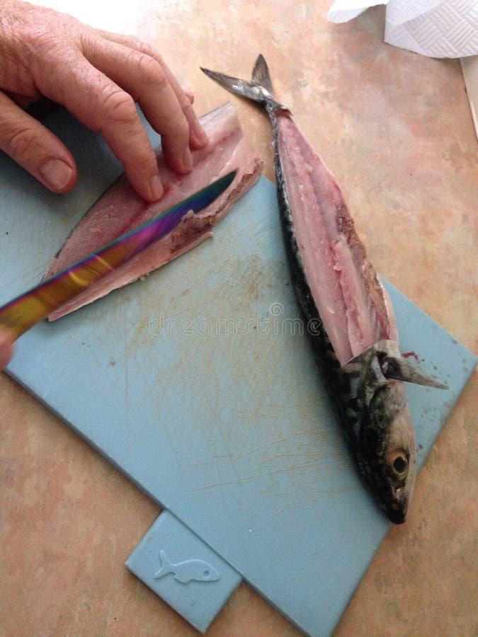 Ausweidende Makrelenfische Devon England des Mannes lizenzfreies stockfoto