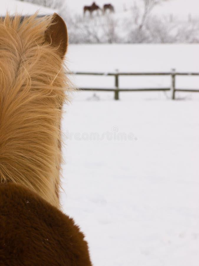 Auszug des Pferds im Schnee lizenzfreies stockbild