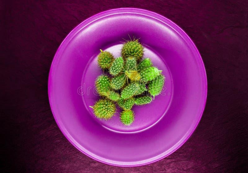 Auszug Stapel des kleinen Kaktus in der purpurroten, rosa Platte auf Burgunder-Farbstein-Hintergrund-Oberfläche stockbild