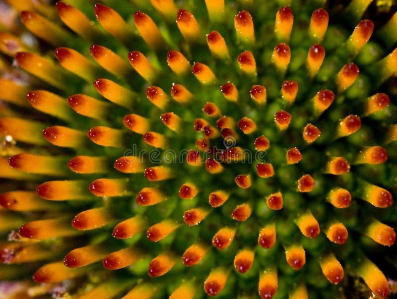 Auszug von der Blume stockfotos