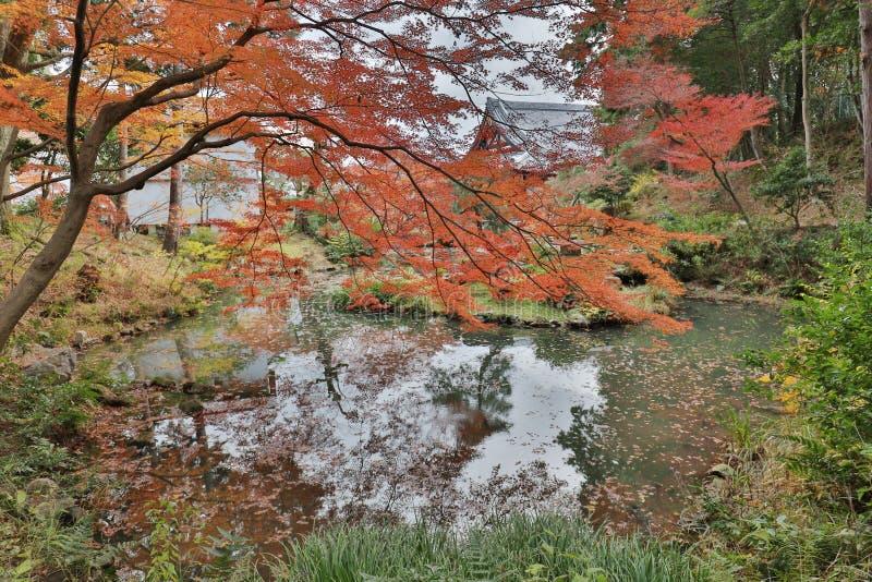The Autam garden in Konkai Komyoji Temple. Fall in Konkai Komyoji Temple position Residents royalty free stock image