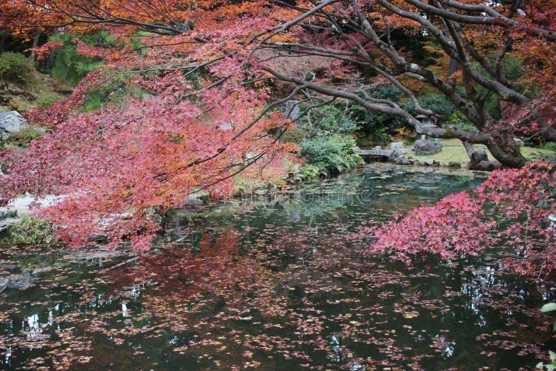 The Autam garden in Konkai Komyoji Temple. Fall in Konkai Komyoji Temple position Residents royalty free stock photos