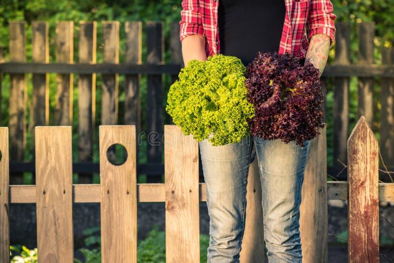 Autentyczna młodej kobiety mienia sałata w ogródzie obrazy royalty free