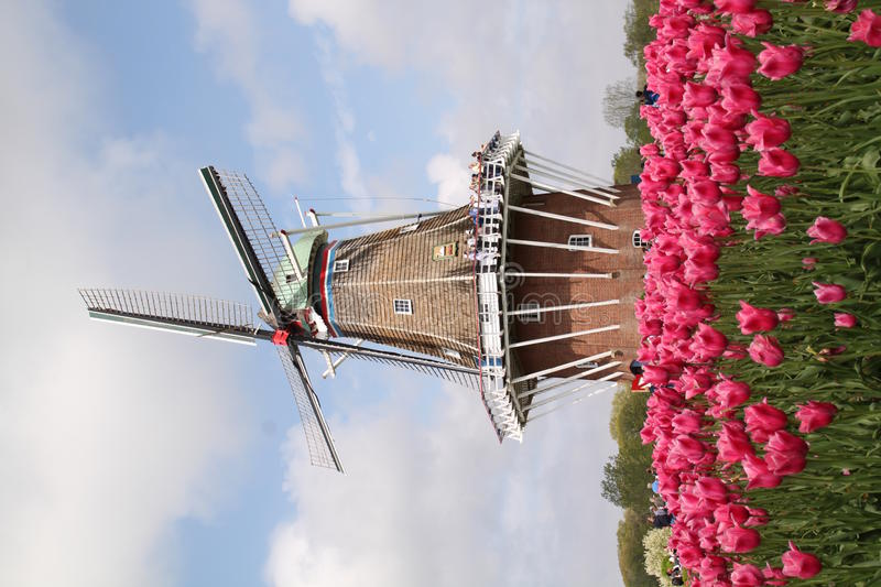 Authentic Dutch Windmill royalty free stock photography