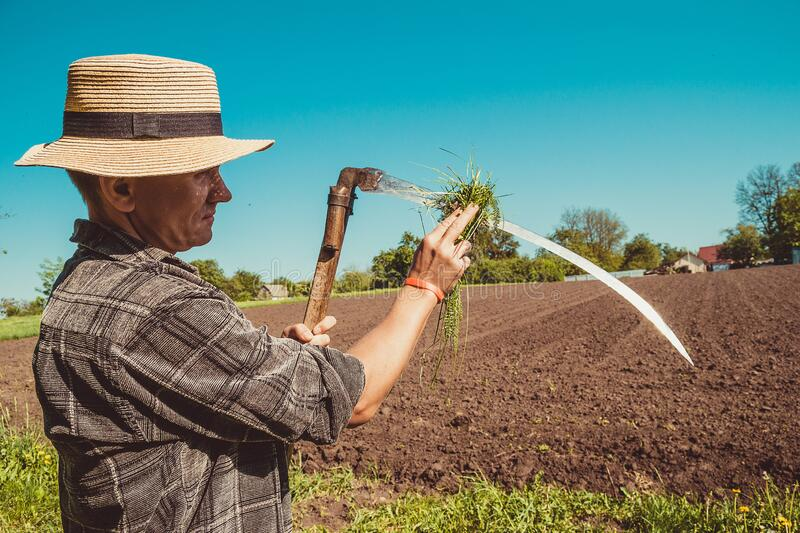 Authentic rural farmer in straw hat clean scythe with grass. Agriculture worker. Sharp blade. Vegetable garden. Farm implements. stock photos