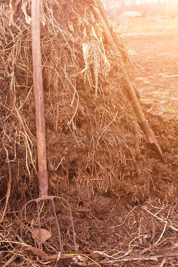 Authentic straw manure heap from livestock with shovel and pitchfork stock image