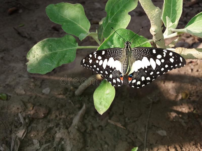 Authentieke Schoonheid van Vlinder royalty-vrije stock foto
