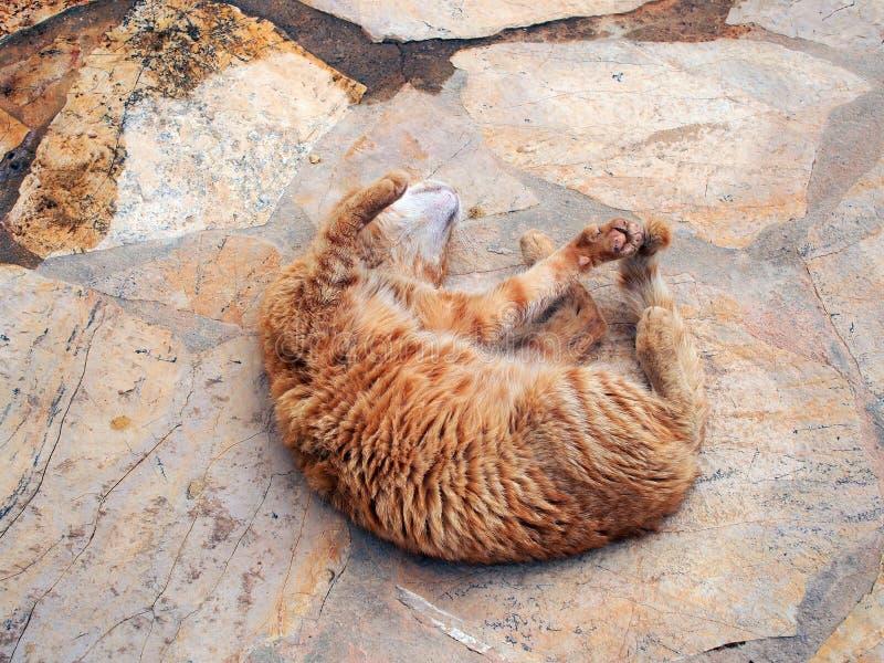 Authentischer Ginger Tabby Cat Rolling auf Pflastersteinen stockfotos
