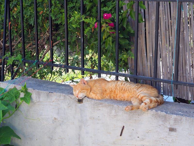 Authentischer Ginger Tabby Cat Sleeping auf Garten-Wand lizenzfreie stockfotos