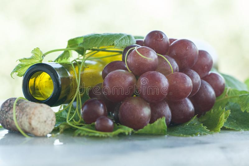 Authentisches biologisches Lebensmittel Trauben italienische delishes stockfotografie