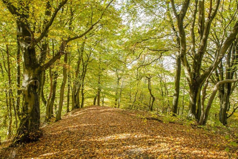 Autmn στο δάσος στοκ φωτογραφίες