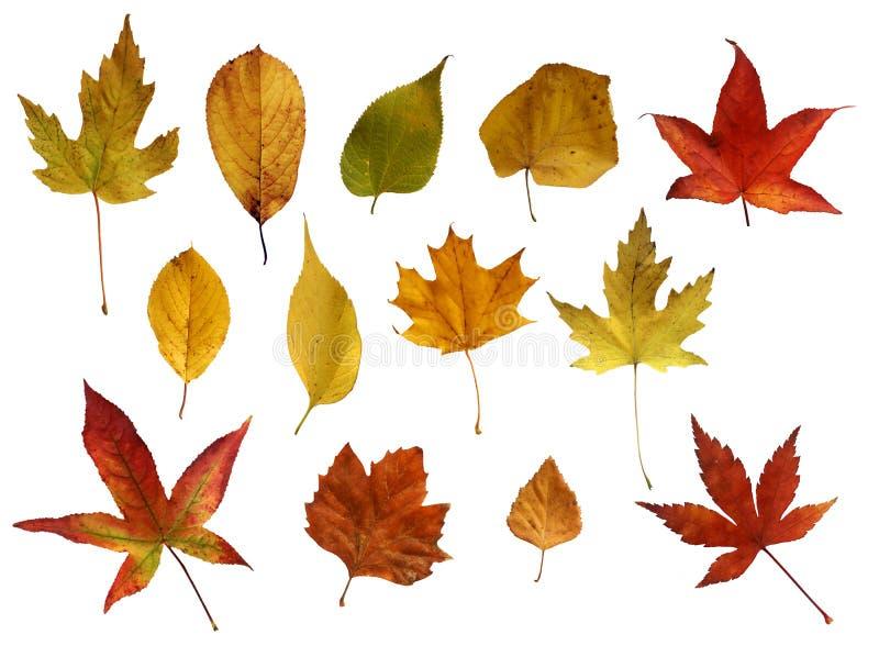 Autmn-Blätter stockfotos