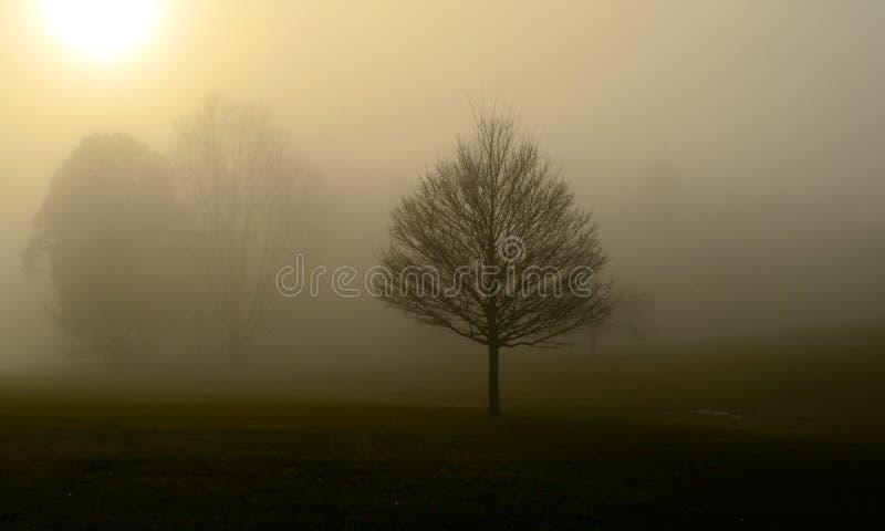 Autmn Fog In Hampstead London Uk stock image