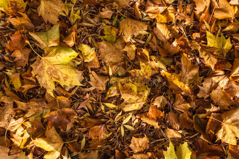 Autmn leaves creating texture on the ground stock image