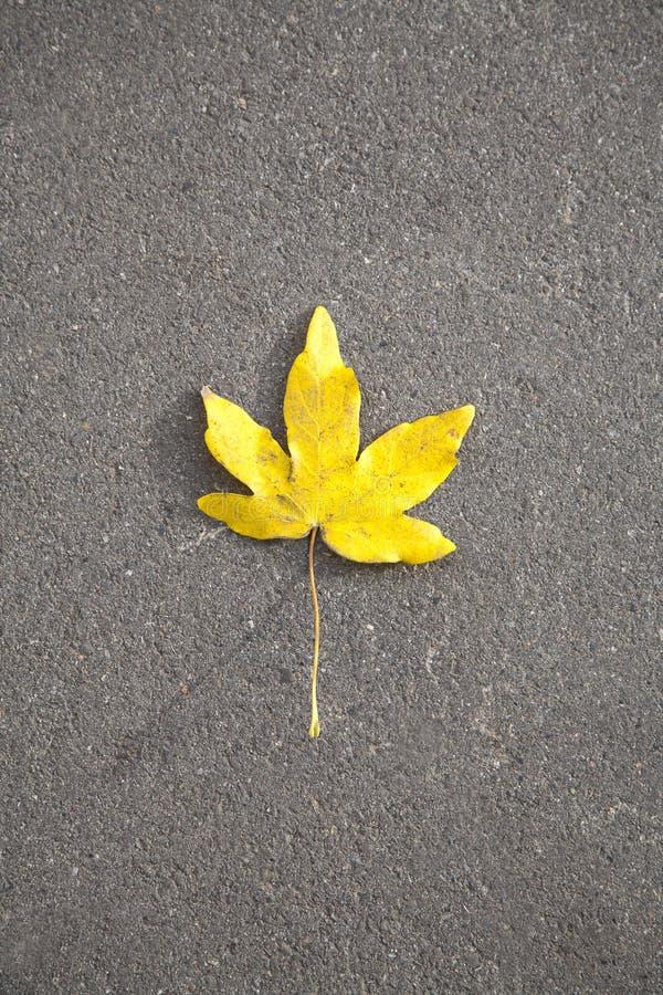 Autmn liść na asfaltowej pomarańcze zdjęcia stock