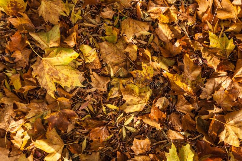 Autmn liście tworzy teksturę na ziemi obraz stock