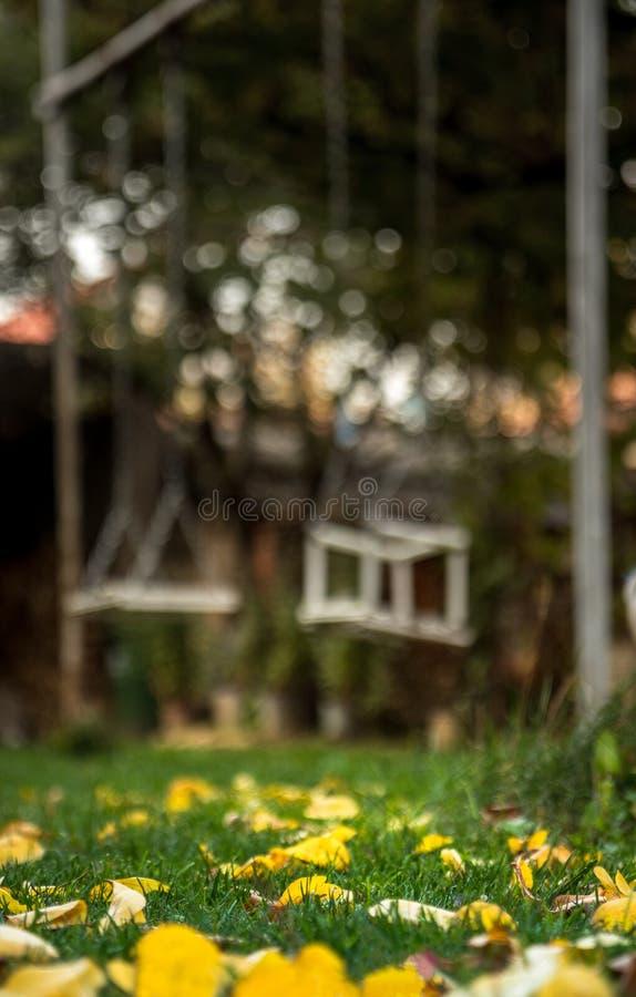 Autmn in meinem Hinterhof - gefallene Blätter und Schwingen lizenzfreies stockbild