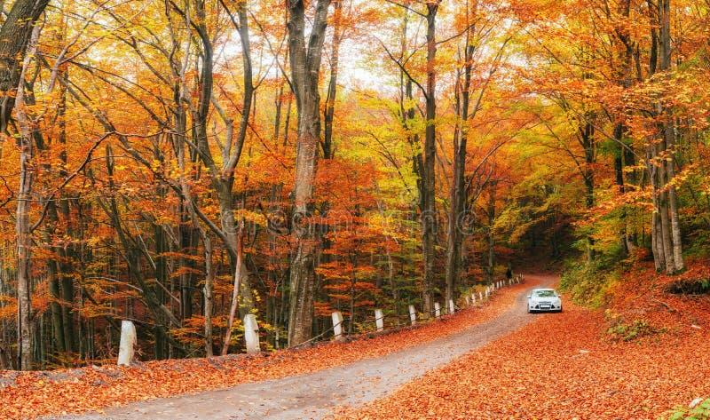 Auto auf einem Waldweg stockbild
