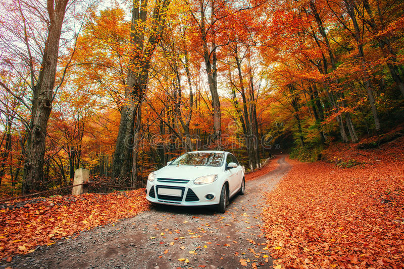 Auto auf einem Waldweg Autumn Landscape ukraine europa stockfoto