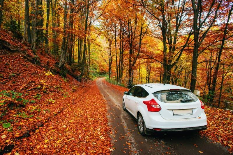 Auto auf einem Waldweg Schöne Straße in den Bergen Ukraine lizenzfreie stockbilder