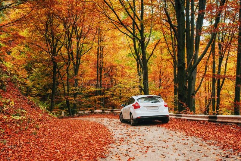 Auto auf einem Waldweg Schöne Straße in den Bergen Ukraine stockfotos