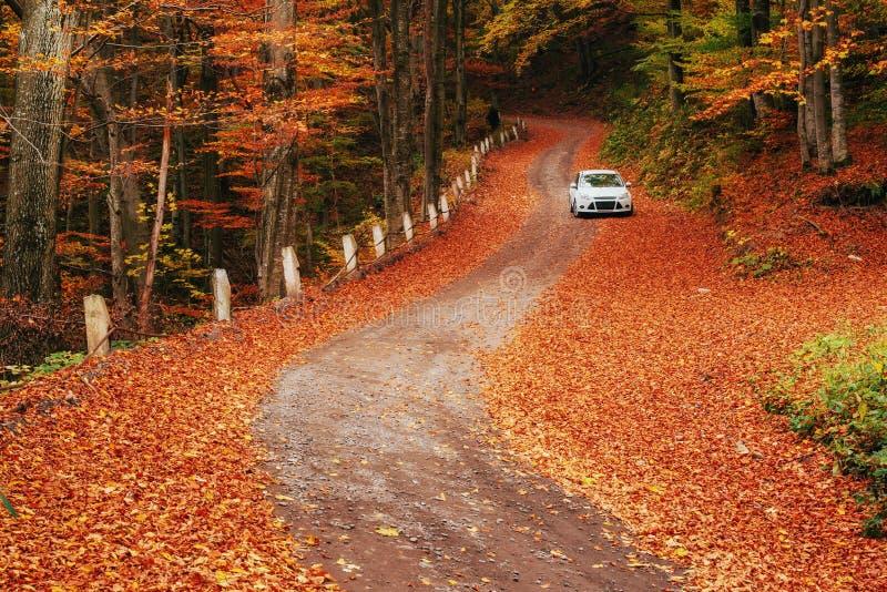 Auto auf einem Waldweg Schöne Straße in den Bergen Ukraine stockbilder