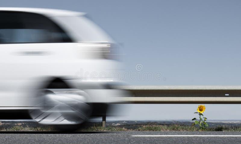Auto, das hinter eine Sonnenblume beschleunigt lizenzfreie stockfotografie