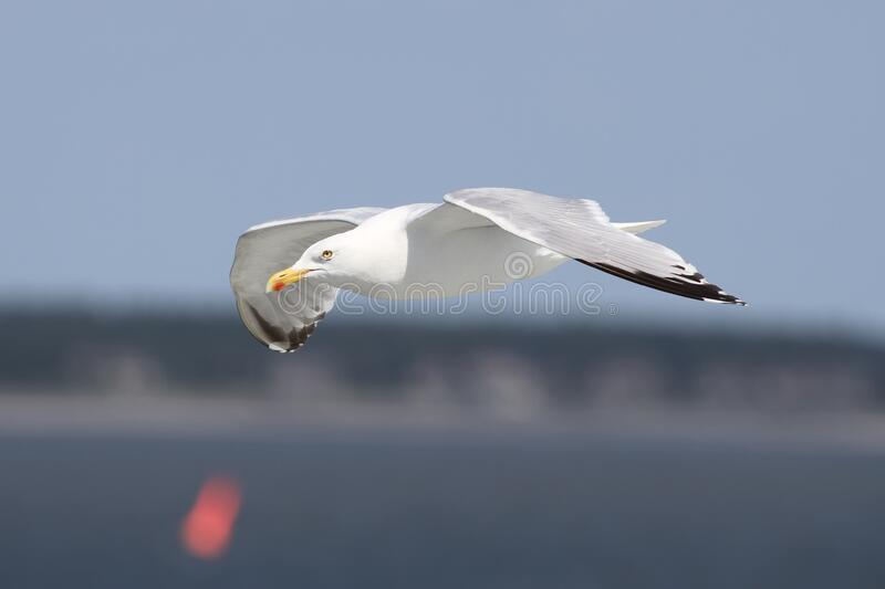 Auto Focus Photography Of Flying White Bird During Daytime Free Public Domain Cc0 Image