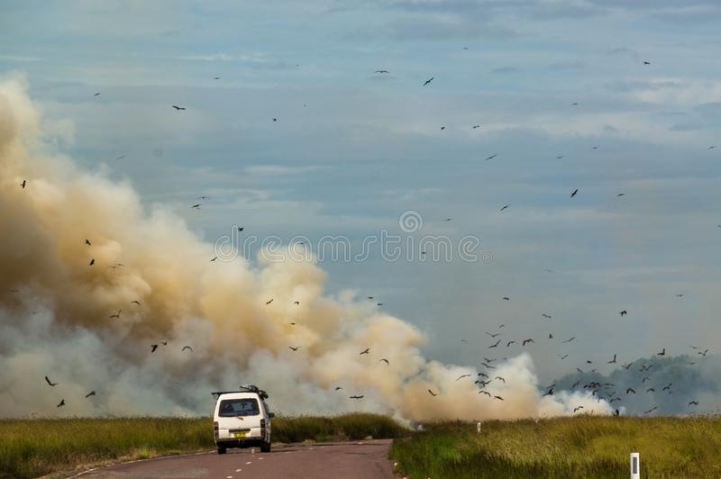 auto het drijven aan een gecontroleerde Bushfire op het Nationale Park van Kakadu, met verschillende vogels, Noordelijk Grondgebi royalty-vrije stock foto's
