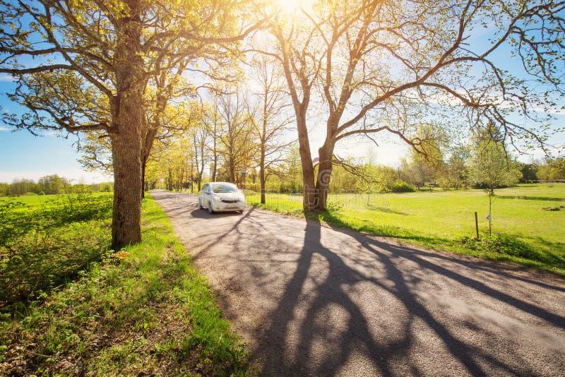 Auto op asfaltweg in de lente royalty-vrije stock afbeelding