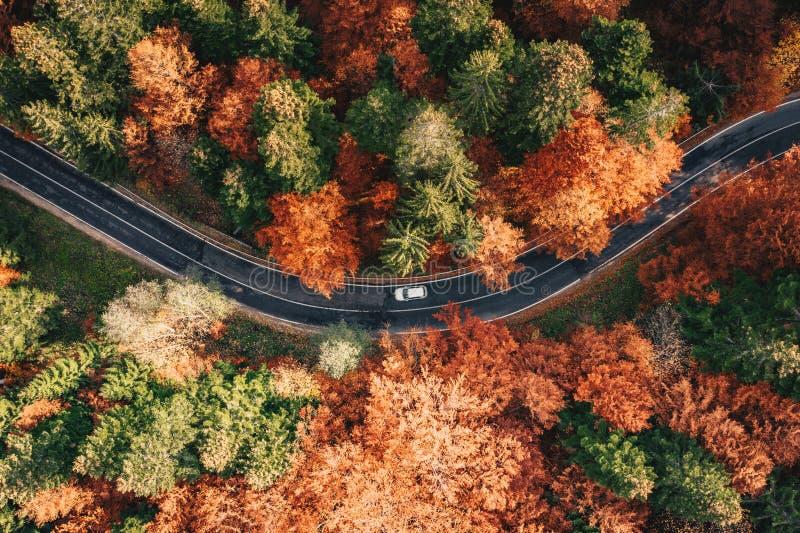 Auto op de weg door bos in de herfst wordt omringd dat Karpatische Mou royalty-vrije stock afbeeldingen