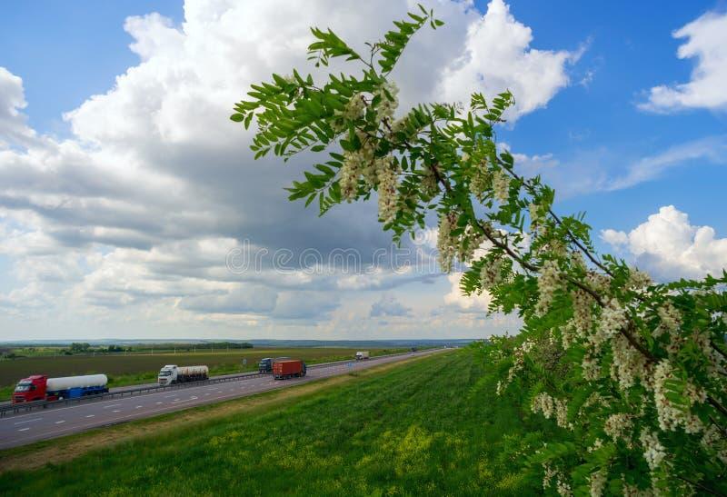 Auto's het drijven op de weg langs bloeiende acaciabloemen stock fotografie