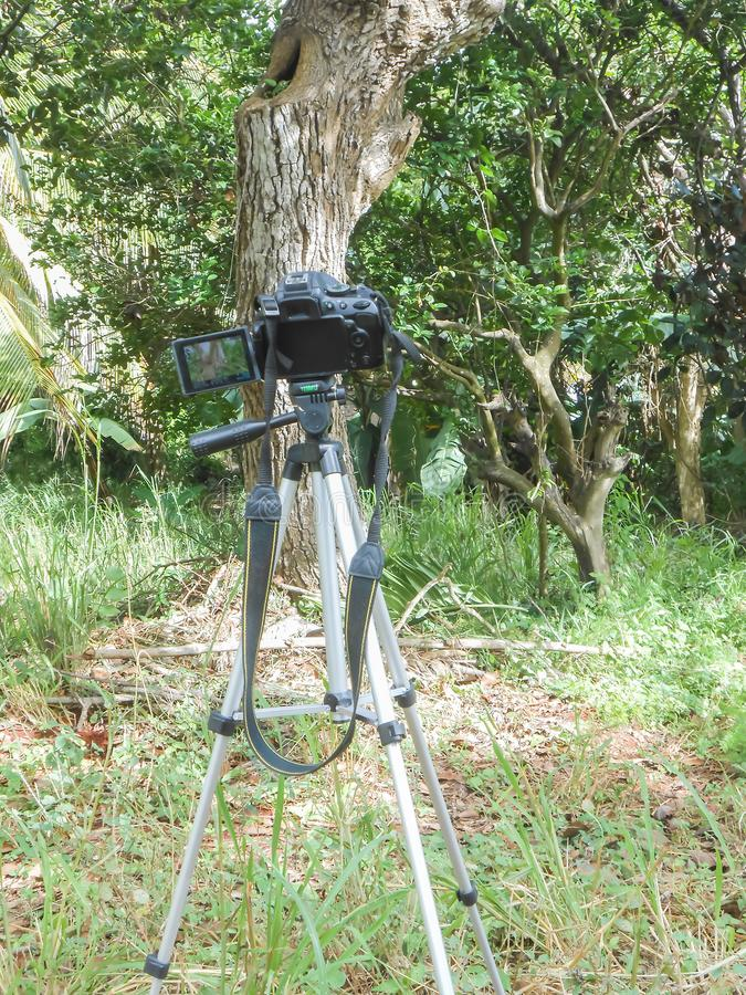 Auto Taking Pictures. A sunny day, in forest, black digital single lens reflex professional camera with long strap hanging, mounted on black and silver tripod stock image