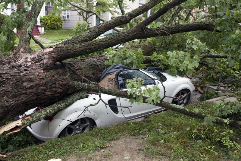Auto zerquetscht durch Baum während des Sturms lizenzfreie stockbilder