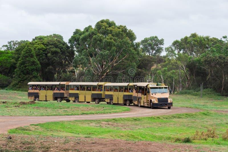 Autobús del safari en el parque zoológico abierto de la gama de Werribee que toma a visitantes a través del parque imágenes de archivo libres de regalías