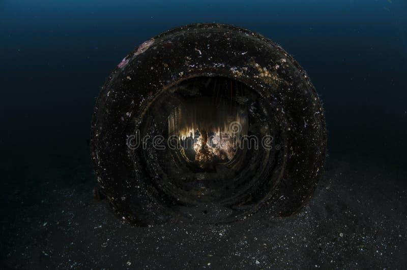 Autoband Onderwater met Pijlinktviseieren stock afbeeldingen