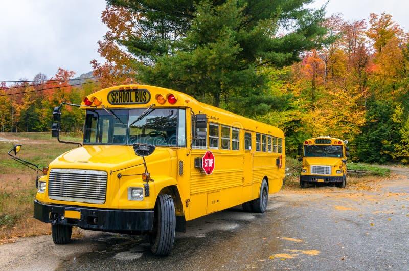 Autobusy szkolni zdjęcia royalty free