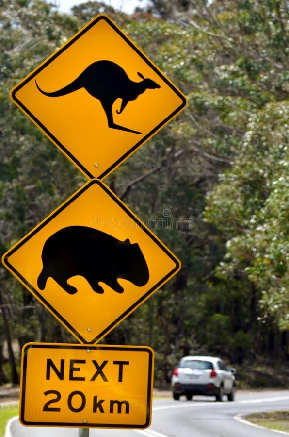 Autodurchlauf ein warnendes Verkehrsschild, von Känguru- und Wombatne aufzupassen stockbilder