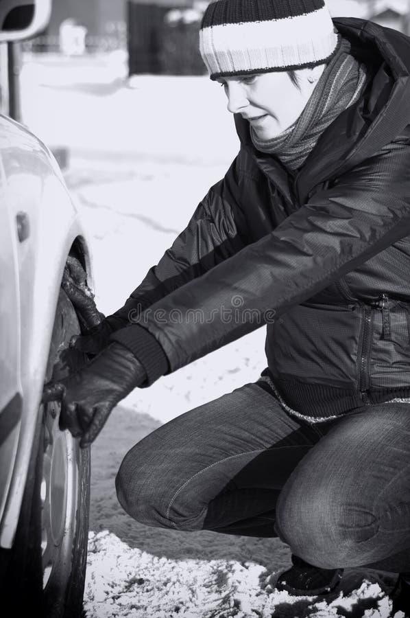 Automühe im Winter lizenzfreies stockbild