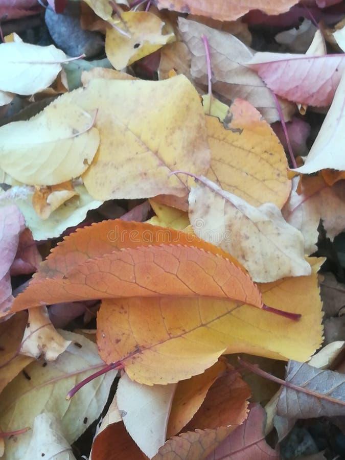 Autom-Blätter stockfoto