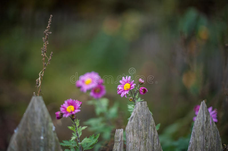 Autom Flower stock images