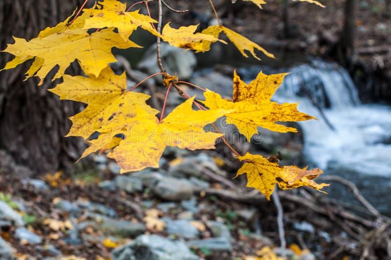 Autom leaf stock photo
