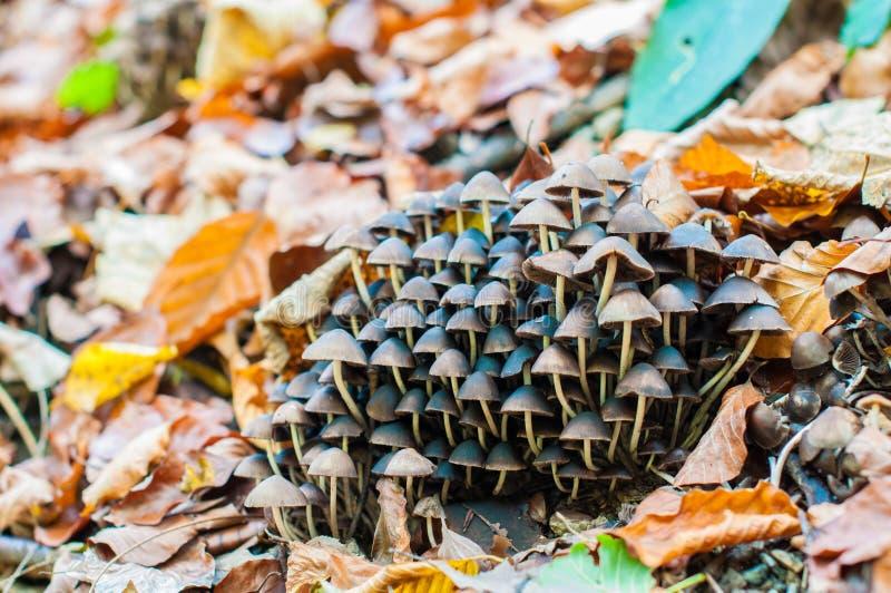 Autom mushrooms stock images