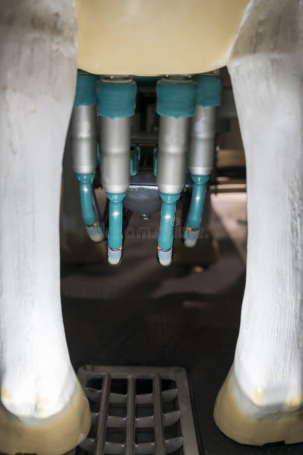 Automated ha meccanizzato la mungitura del primo piano dell'attrezzatura per l'industria del terreno coltivabile Facilit? di mung fotografia stock libera da diritti