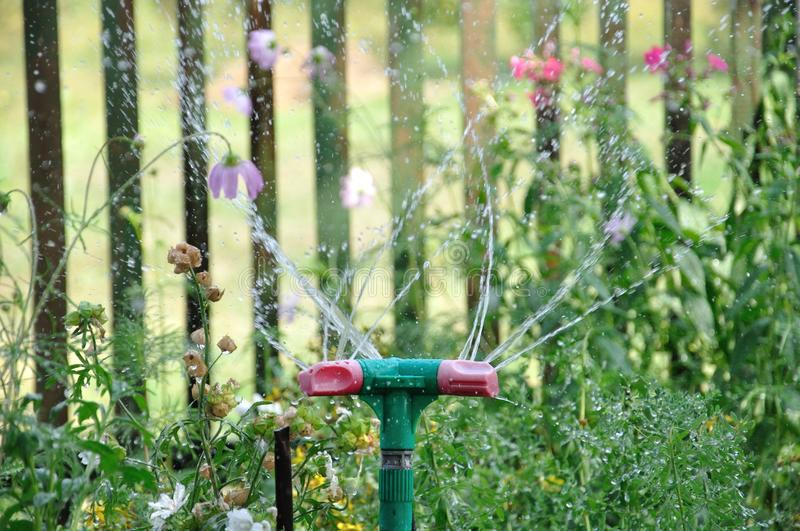Garden sprinkler watering grass at sunny day and droplets of water royalty free stock photography